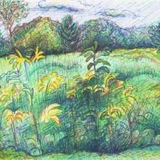 White Marsh Color  9-26-15