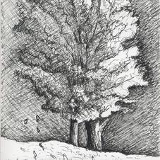 Tree Oregon Ridge 11-11-2014