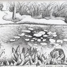 White Marsh Pond 2007