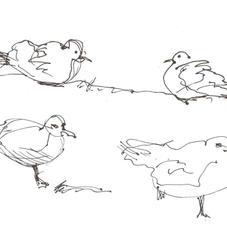 White Marsh Gulls 2006