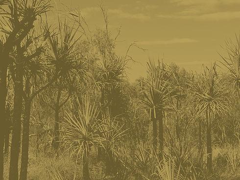 EVOLVE_Textures7.jpg