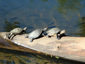 turtle-spotting-coolwaters.jpg