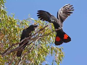 Watch the incredible bird life
