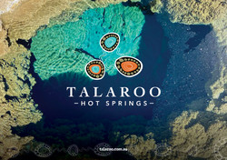 Talaroo Logo Design and Branding