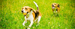 dogs in grass banner.png
