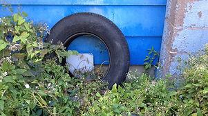old-tires.jpg