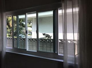 Vinyl Window Installation Torrance, CA