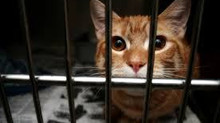 Stop! Please Don't Take Your Cat To A Shelter.