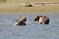 bears-01.jpg