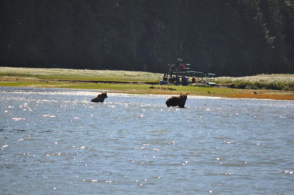 bears-05.jpg
