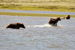 bears-03.jpg