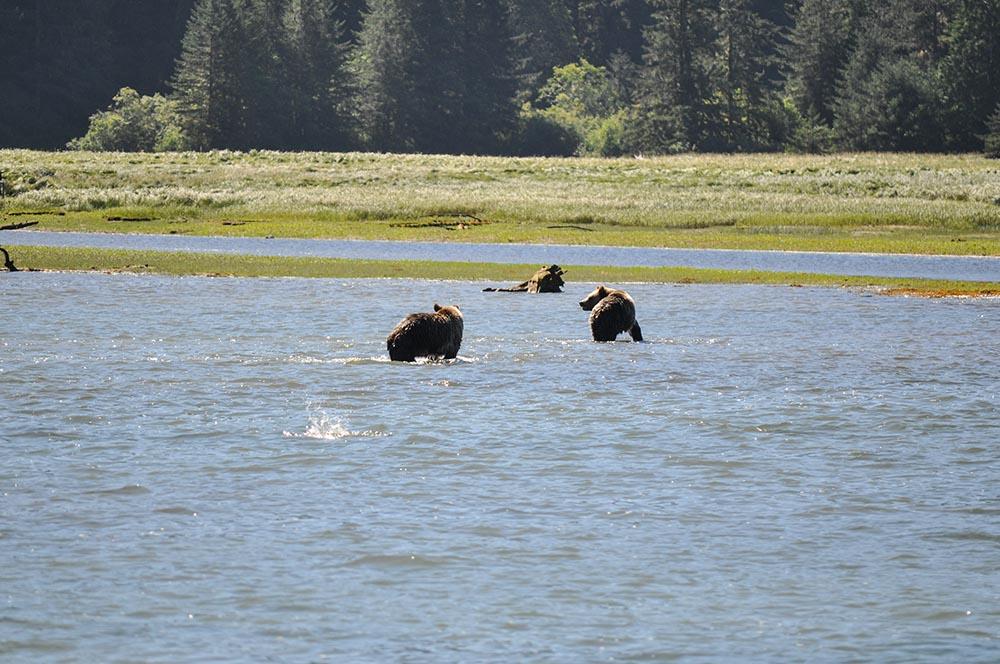bears-04.jpg
