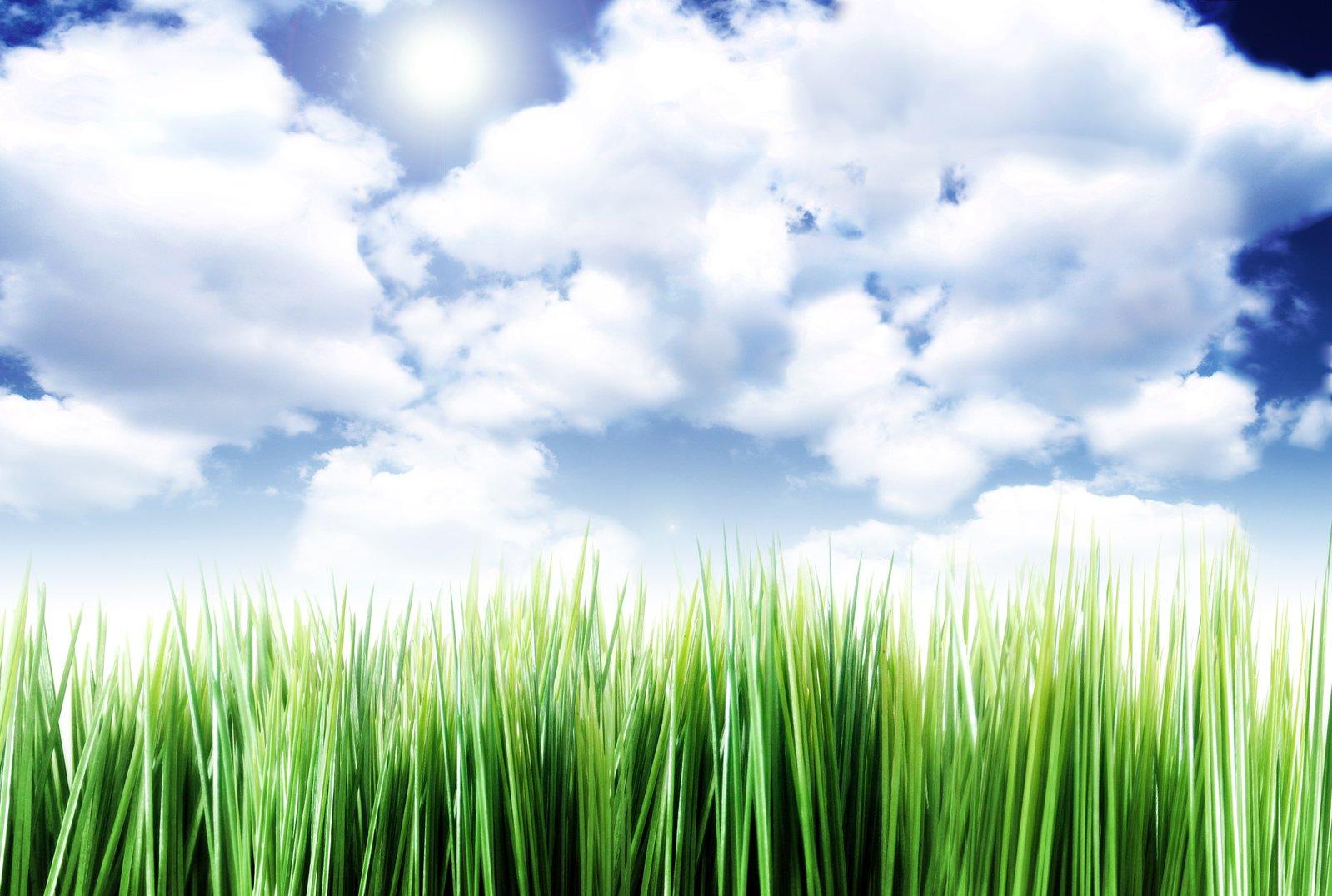 grass-iii-1171821
