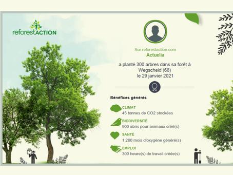 Actuelia plante 300 arbres pour compenser ses emissions de CO2