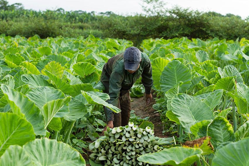 Vegetable_Farmer.jpg