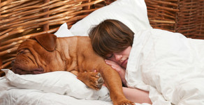 Should You Sleep With Your Pets?