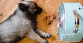 Should You Sleep With A Fan On?