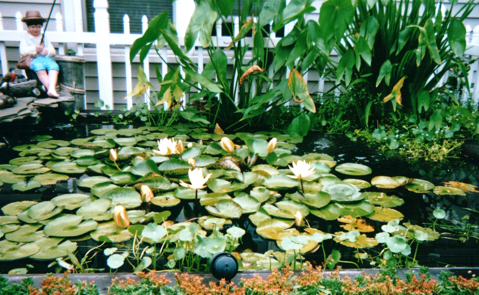 Blackfeld Fisheries Lily Pads