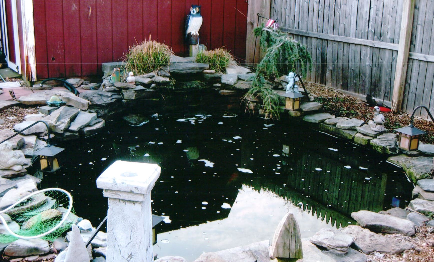 Blackfeld Fisheries Koi Ponds
