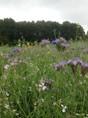 bloemreik grasland.JPG