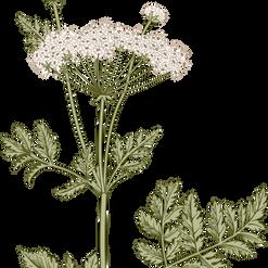 Plants + Seeds