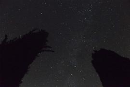 cel de nit