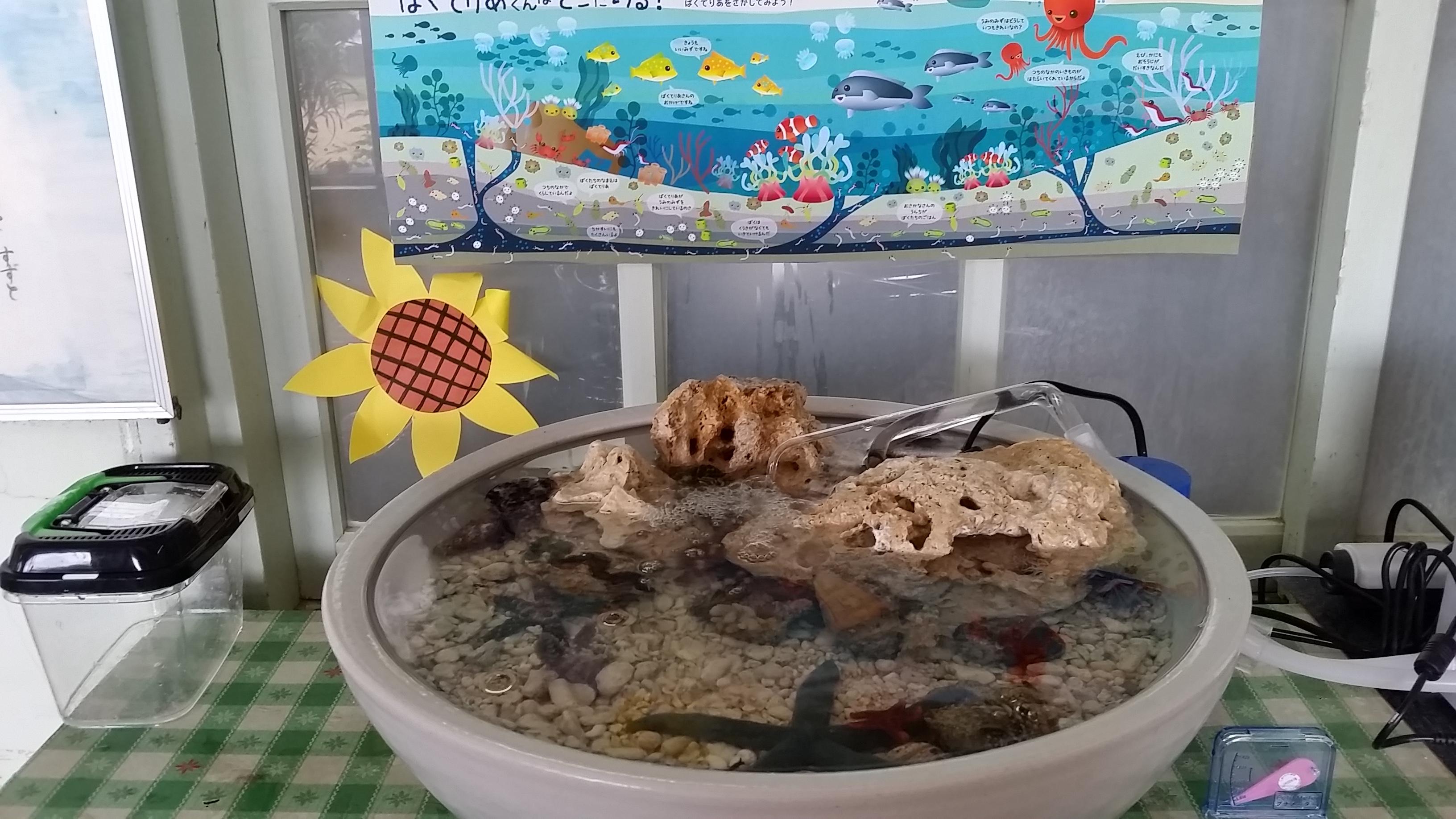 与論島小学校海盆栽1