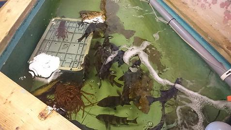 HONUMI,ホンマもんの海,活魚水槽,生簀水槽,水槽設備,生簀設備