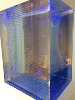 クラゲ水槽3