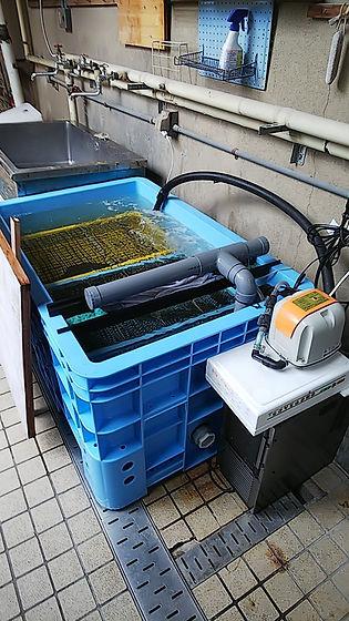 生簀水槽,活魚水槽,生簀水槽販売,活魚水槽販売,水槽ろ過装置,生簀濾過,ろ過バクテリア,ろ過微生物,浄化微生物,HONUMI,ホンマもんの海
