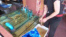 牡蠣専用生簀,牡蠣専用活魚水槽,活魚水槽,生簀水槽,活魚水槽販売,生簀水槽販売,水槽設備,生簀海外,活魚水槽海外,HONUMI
