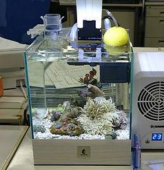 海水魚飼育,簡単海水魚飼育,海水魚小型水槽,ろ過槽,ろ過微生物,ろ過バクテリア,浄化微生物,微生物浄化,HONUMI,ホンマもんの海
