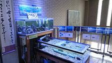 海水アクアリウム,中学校アクアリウム,中学校アクアリウム水槽,中学校海水アクアリウム,アクアリウム教材,水槽設備,HONUMI,ホンマもんの海