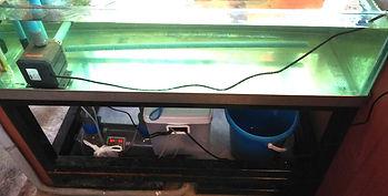 海外の生簀,海外の活魚水槽,海外の生簀事情,海外の活魚水槽事情,海外活魚水槽販売,海外生簀販売,HONUMI,ホンマもんの海,海外スーパーナチュラルシステム
