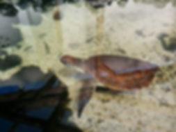 仔魚育成、仔魚育成研究、HONUMI、ホンマもんの海、海洋生物繁殖研究