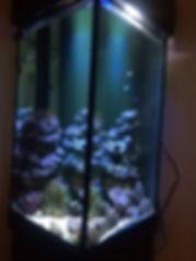 アクアリウム,無換水,海水魚水槽,無換水水槽,水換え無し水槽,無添加水槽,ろ過材,ろ過バクテリア,濾過,ろ過装置,ろ過微生物,浄化微生物,HONUMI,ホンマもんの海