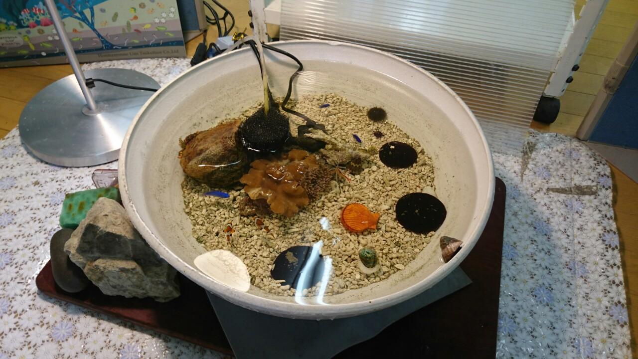 小学校の海盆栽
