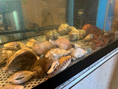 生簀や活魚水槽を製造販売,既存水槽や業務用活魚水槽を一括サポート,HONUMIスーパーナチュラルシステム
