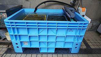 活魚水槽,生簀,活魚水槽販売,生簀販売,屋外型生簀,屋外型活魚水槽,HONUMI, スーパーナチュラルシステム,水槽設備