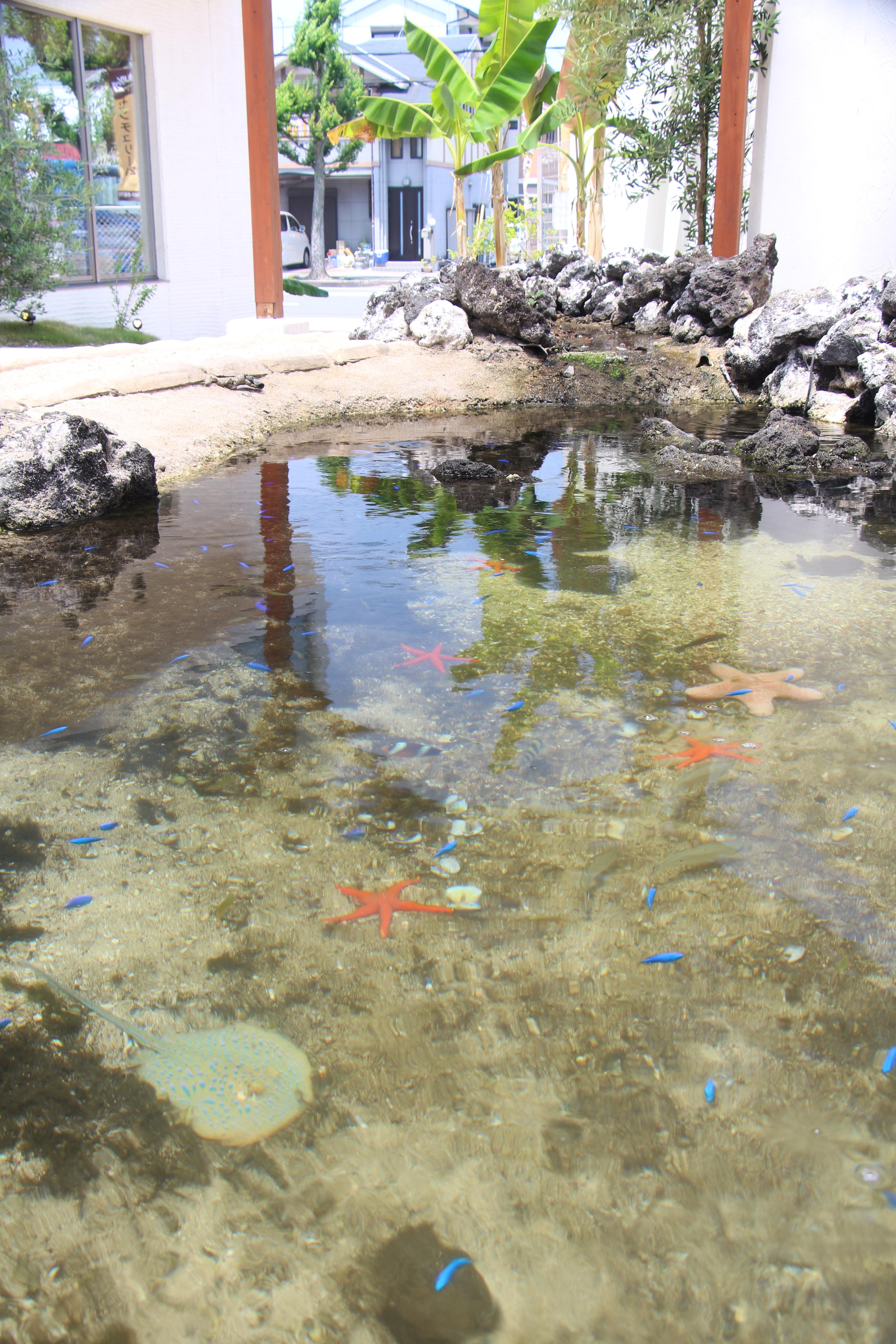 マンションに海の池