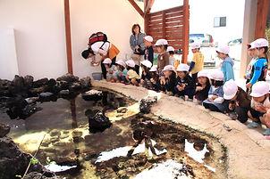 HONUMIアクアリウムは海水池も。園児たちが興味津々。今はウミガメの池