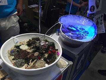 HONUMI,ホンマもんの海,海盆栽,HONUMIアクアリウム,HONUMIイベント