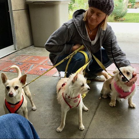 #shelterdogs #doglovers #lagunabeach #orangecounty #adoptadog #animalshelter #adoptdontshop #adoptnotshop #bekind
