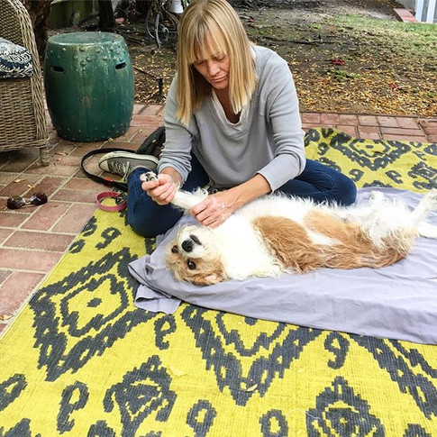Weekly massage helps Maggie's anxiety as well as some early arthritis.jpg