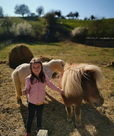 poney2.jpg