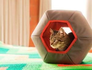 Como criar o espaço perfeito para o bicho de estimação no apartamento