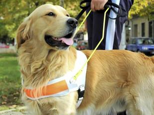 OAB adverte: condomínios não podem restringir trânsito de cães guia!