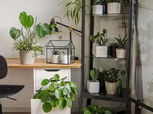 Guia para cultivar plantas em apartamentos