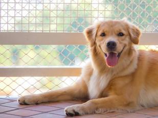 Projeto garante, em lei, criação de animais domésticos em condomínios