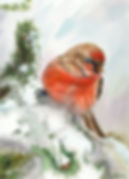 art026-house finch.jpg